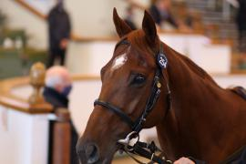 Lot  254 H I T1199 Tattersalls