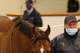 Lot  276 H I T1423 Tattersalls