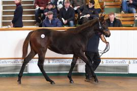 Lot  316 T D F0359 Tattersalls