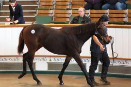 Lot  316 T D F0375 Tattersalls