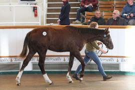 Lot  326 T D F0459 Tattersalls