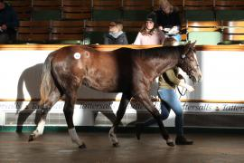 Lot  326 T D F0481 Tattersalls