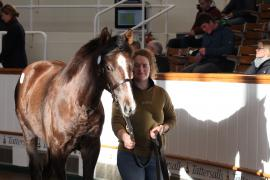 Lot  326 T D F0500 Tattersalls