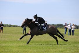 Lot  32 T C B2536 Tattersalls