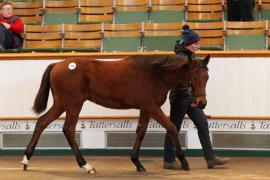 Lot  346 T D F0521 Tattersalls