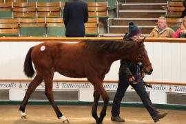 Lot  346 T D F0527 Tattersalls