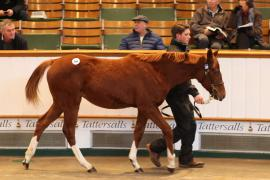 Lot  366 T D F0604 Tattersalls