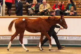 Lot  366 T D F0646 Tattersalls