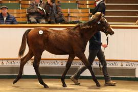 Lot  378 T D F0916 Tattersalls