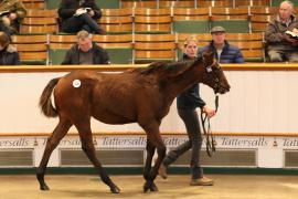 Lot  378 T D F0941 Tattersalls