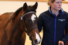 Lot  378 T D F0971 Tattersalls