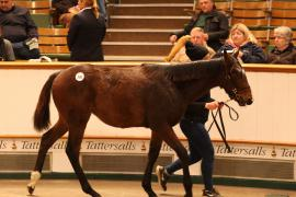 Lot  398 T D F0992 Tattersalls