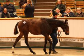 Lot  398 T D F1015 Tattersalls