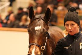 Lot  398 T D F1074 Tattersalls