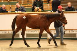 Lot  463 T D F1136 Tattersalls