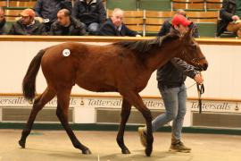 Lot  463 T D F1206 Tattersalls