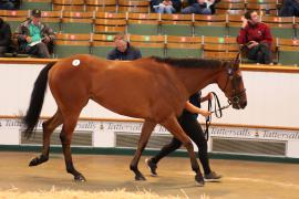 Lot  47 T G B0895 Tattersalls