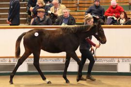 Lot  524 T D F0028 Tattersalls