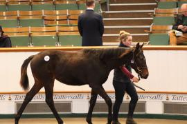 Lot  524 T D F0038 Tattersalls