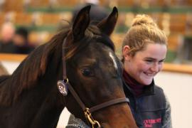 Lot  524 T D F0086 Tattersalls