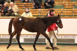 Lot  529 T D F0158 Tattersalls