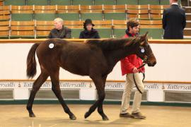 Lot  529 T D F0164 Tattersalls