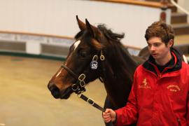 Lot  529 T D F0174 Tattersalls