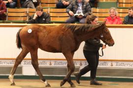 Lot  545 T D F0250 Tattersalls