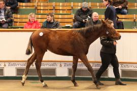 Lot  545 T D F0278 Tattersalls