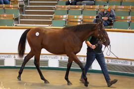 Lot  565 T B K2 0026 Tattersalls
