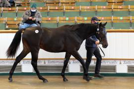 Lot  576 T B K2 0174 Tattersalls