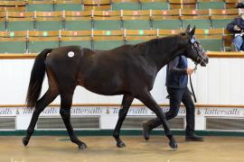 Lot  576 T B K2 0223 Tattersalls