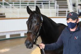 Lot  576 T B K2 0242 Tattersalls
