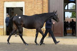 Lot  576 T B K2 0267 Tattersalls