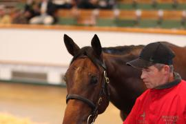 Lot  581 T B2 0127 Tattersalls