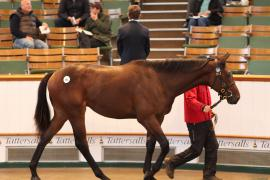 Lot  581 T B2 0181 Tattersalls