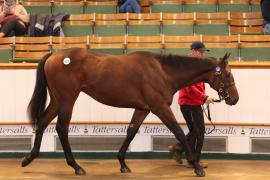 Lot  581 T B2 0194 Tattersalls