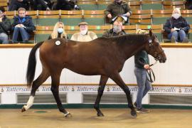 Lot  590 T B K2 0300 Tattersalls
