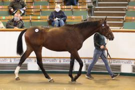 Lot  590 T B K2 0304 Tattersalls