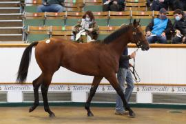 Lot  600 T B K2 0409 Tattersalls