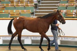 Lot  600 T B K2 0451 Tattersalls