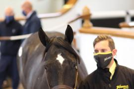 Lot  608 T B K2 0576 Tattersalls