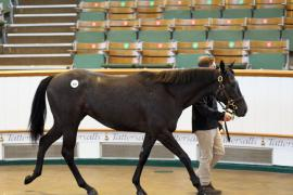 Lot  608 T B K2 0583 Tattersalls