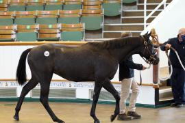 Lot  608 T B K2 0587 Tattersalls