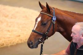 Lot  610 T B2 0847 Tattersalls