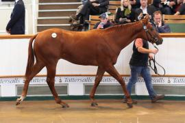 Lot  610 T B2 0869 Tattersalls