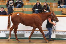 Lot  610 T B2 0907 Tattersalls
