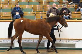 Lot  630 T B K2 0690 Tattersalls