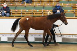 Lot  630 T B K2 0704 Tattersalls