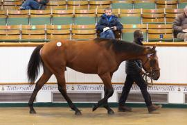 Lot  631 T B K2 0784 Tattersalls